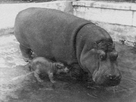 Как пережили войну обитатели Московского зоопарка
