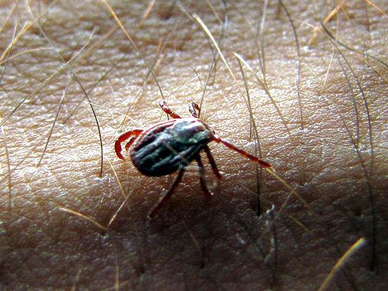 борьба с паразитами народными средствами дома