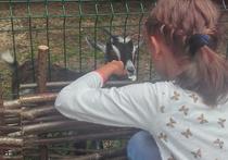 В Химках открылся контактный зоопарк  на полутора гектарах парка