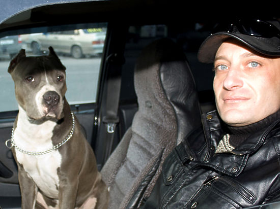 фото: Из личного архива Антуан Наджарян со своим помощником, американским стаффордширским терьером Итоном.