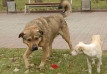 В Москве хотят установить доски позора для тех, кто не убирает за собаками