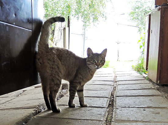 В Москве могут появиться жилищные нормативы на домашних животных
