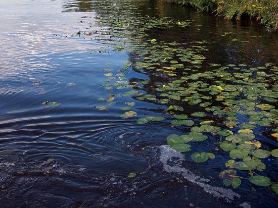 В Подмосковье очистят почти 100 километров рек