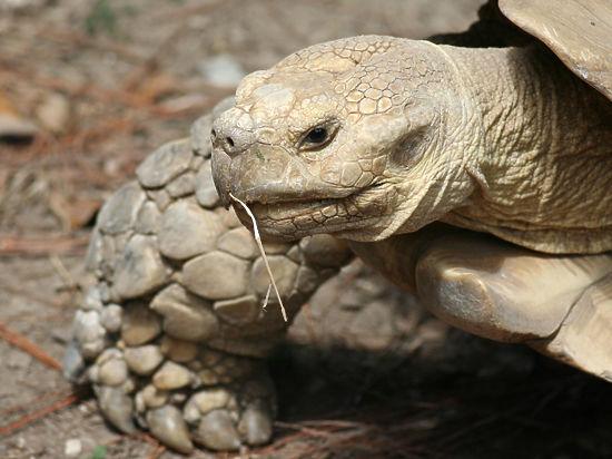 На Галапагосских островах, где бывал Дарвин, найдены новые гигантские черепахи
