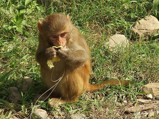 Названы кардинальные отличия мозга человека от мозга шимпанзе