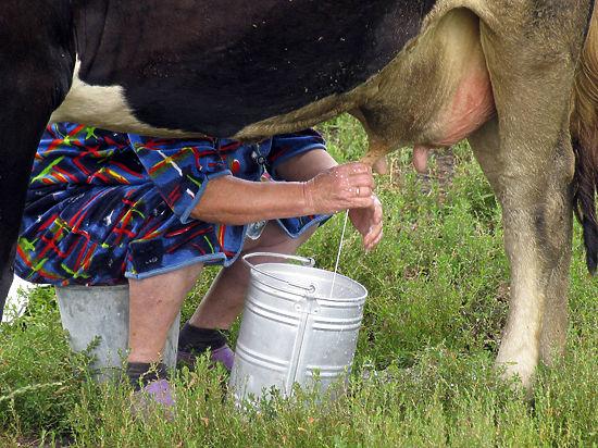 Молочный кризис в России: вместо масла нас кормят пластилином