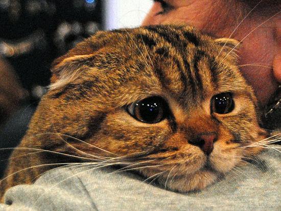 В Германии запретили кошачий секс