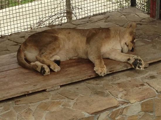 Из-за энергетической блокады животные зоопарков Крыма оказались на грани гибели