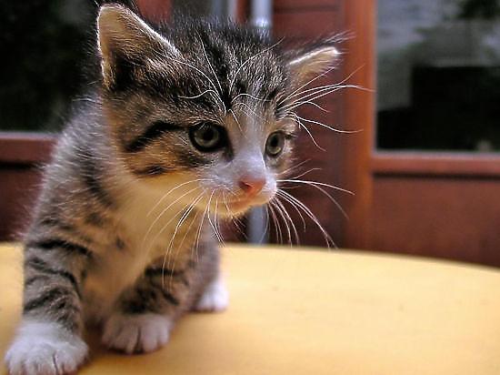 Монету с пятью сказочными кошками выпустили в Латвии