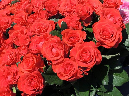 Россия ввела необъявленное эмбарго на импорт цветов из Турции