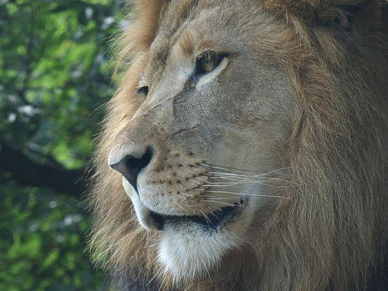 Обитателям ялтинского зоопарка осталось жить считанные часы из-за энергоблокады Крыма