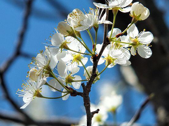 В «Аптекарском огороде» растения спустали оттепель с весной