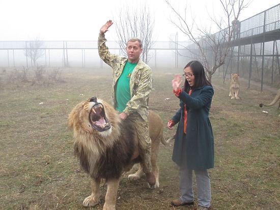 Директор крымского сафари-парка просит Кадырова вступиться за зверей