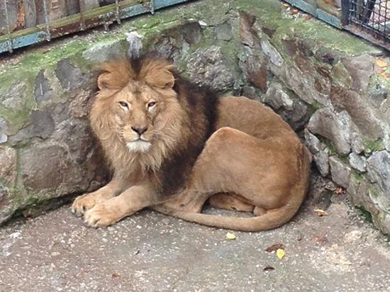 «Боевые львы Тайгана»: директор ялтинского зоопарка начал борьбу с властью