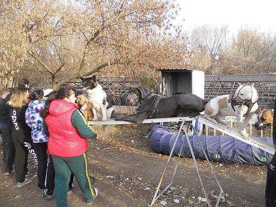 «Собаку разорвало вместо меня»: как живут люди и звери Донбасса