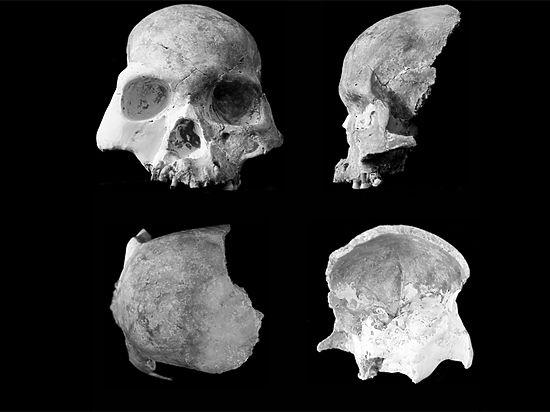14 тысяч лет назад люди дружили с древними карликами