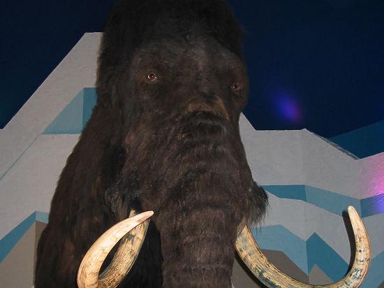 Учёные планируют заселить мамонтами Сибирь