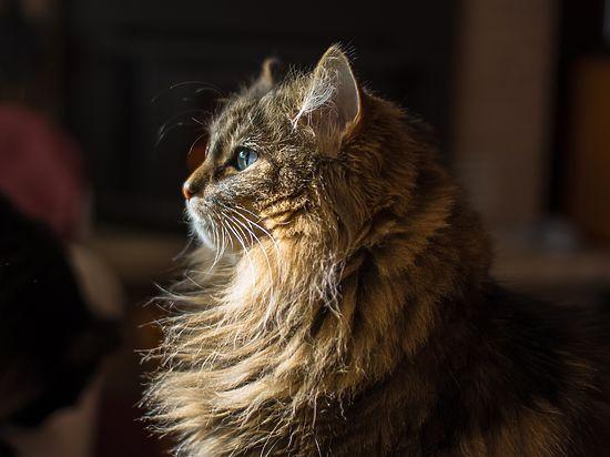 Эпопея со спасением кошки из обменного пункта завершилась успешно