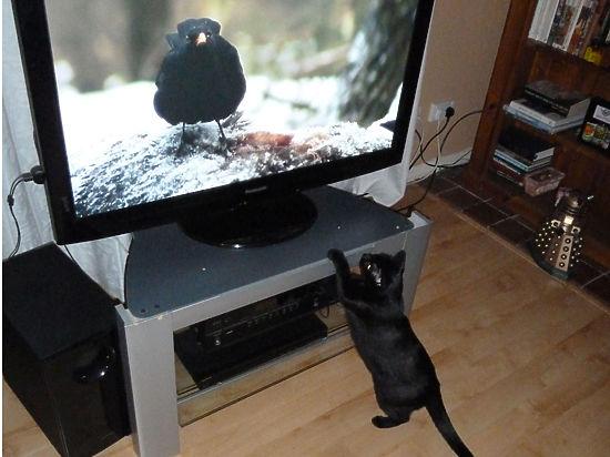 Главный выбор 2016: телевизор против холодильника