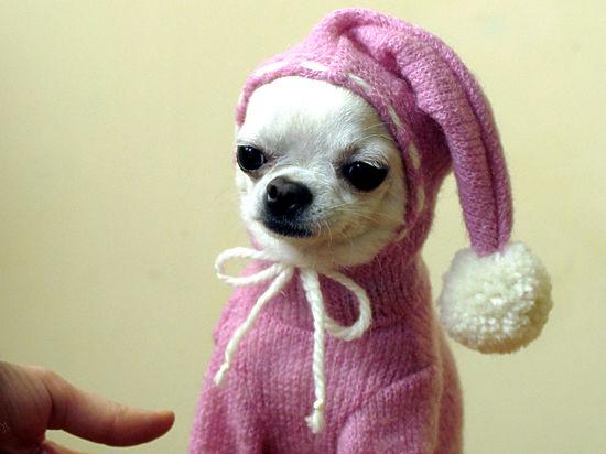 Зоопсихолог посоветовал лучшие подарки собаке и кошке на Новый год