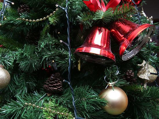 Новогодние ели москвичей превратят в удобрение