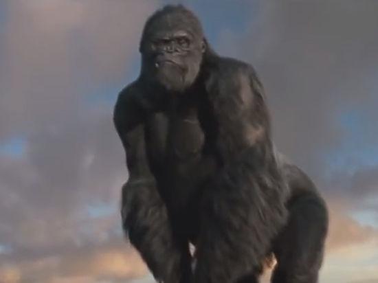 Учёные рассказали, почему вымерли Кинг-Конги