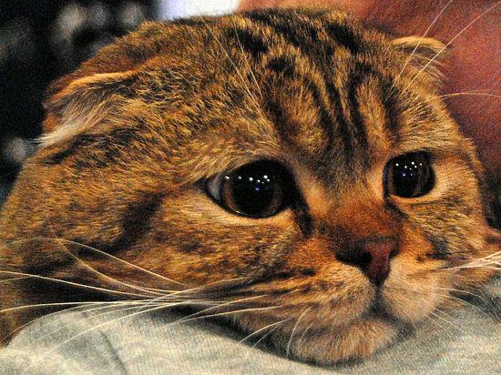 В Москве ветеринары прооперировали кошку, которая съела целый свитер