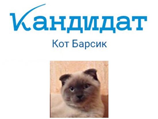 Кот Барсик стал кандидатом на праймериз «Единой России»