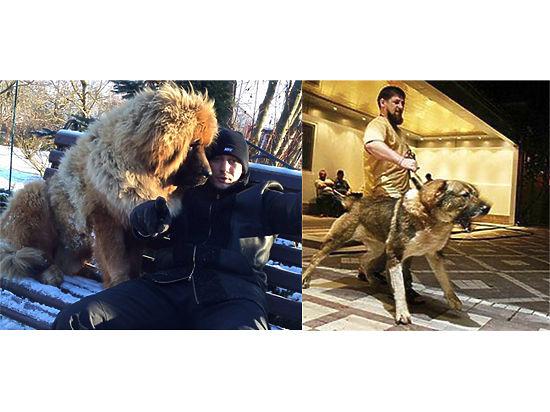 Оппозиция и чеченские политики померились собаками в социальных сетях