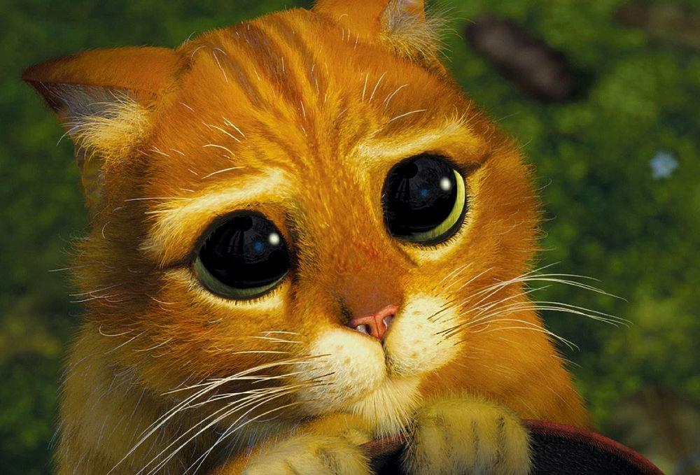 Кот шрек взгляд