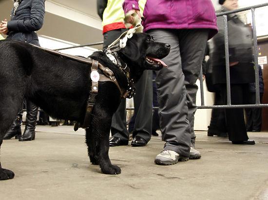 Минтранс разрешил инвалидам путешествовать по воде с собакой-поводырем