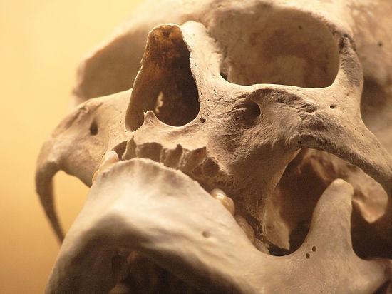 Жертвы древнейшего массового убийства обнаружены археологами