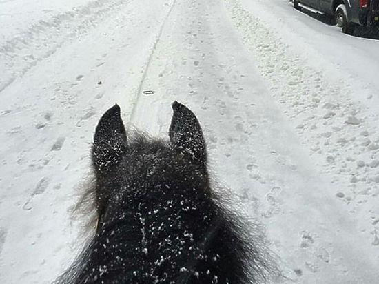 Стандартный русский пейзаж: живущие в США россияне рассказали о снегопаде