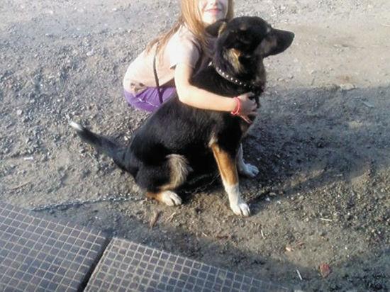 В Подмосковье живодеры похитили и расчленили собаку