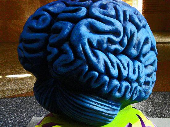 Ученые объявили, что женский мозг не приспособлен для похудения