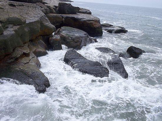 Ученые заявили, что Индийский океан становится «экологической пустыней»