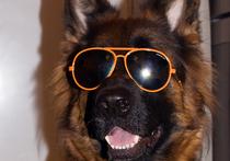 Маленький москвич вставил собаке контактные линзы