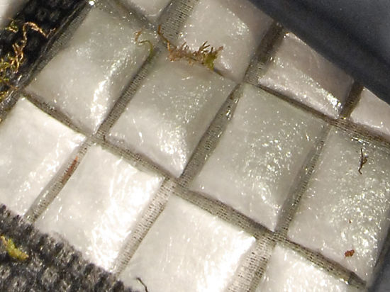 Полиция поймала победителей квеста по поиску клада из наркотиков
