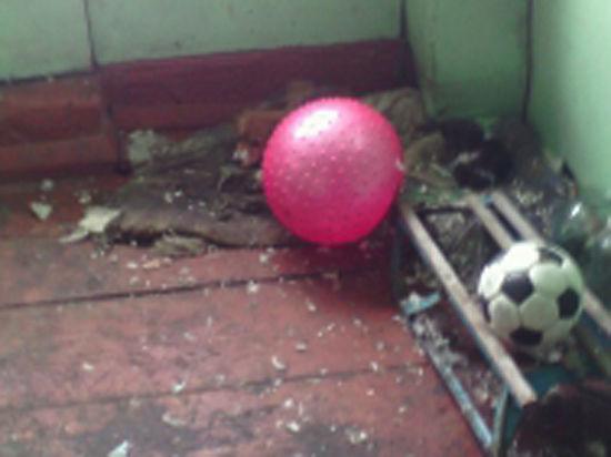 Девочку-инвалида, брошенную матерью, спасла от холода собака