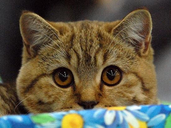 Московские ветеринары спасли кошку, проглотившую медицинскую маску
