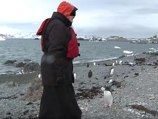 Патриарх Кирилл с пингвином в Антарктиде стали объектом фотожаб