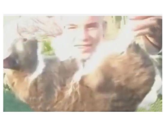 Уроды из Рязани взорвали кота петардой и сняли на видео