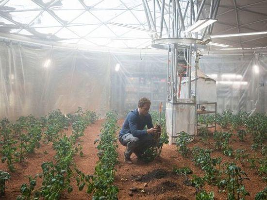 Специалисты NASA решили вырастить картошку в марсианских условиях