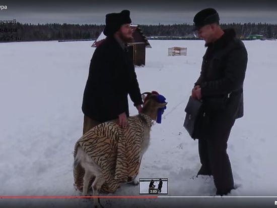 Козла Тимура сватают за козу сыровара Сироты, известного скандальной женитьбой