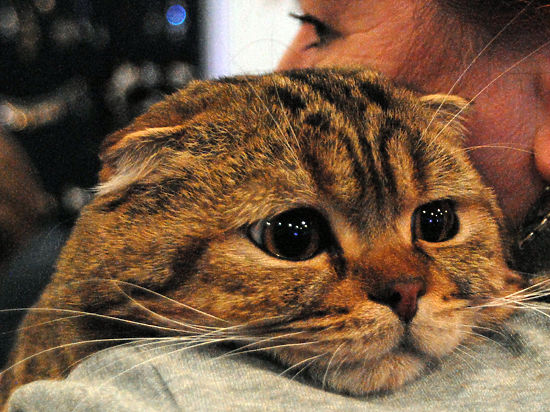 Как в кризис сэкономить на кошке