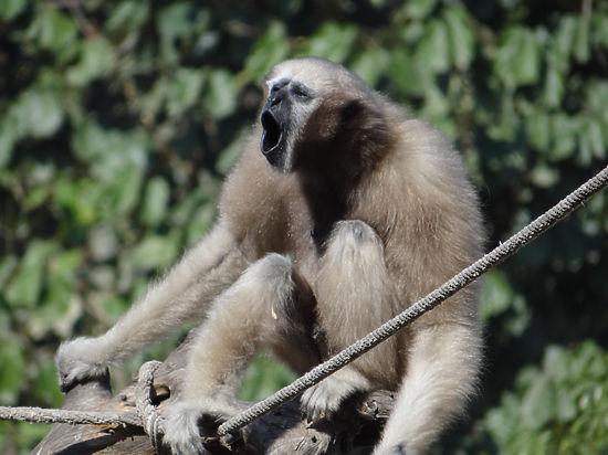 Антропологи: мясная диета сделала из обезьяны человека