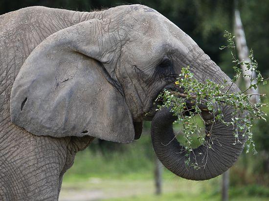 В Московском зоопарке можно будет дернуть слона за хобот