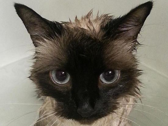 Кошка выжила, проведя восемь дней в посылке
