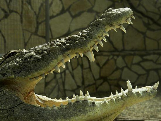 Секс крокодилов