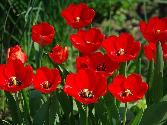 В России могут возродить выращивание опийного мака